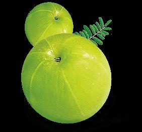 Real Amla Juice - Real Fruit Juices